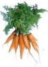 маска CAROTA  морковь  275мл